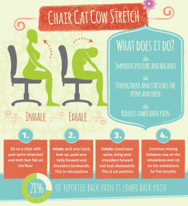 Chair Cat Cow Streatch
