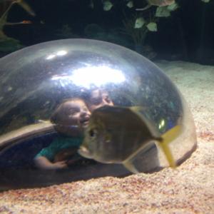 Ripley Aquarium