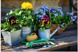 flower pots in garden