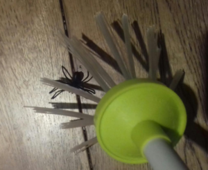 Spider Catcher in action