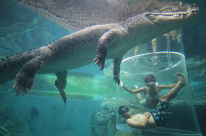 Croc Cove Australia